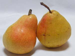 15-pears2-300