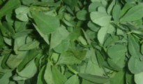 12-fenugreek-leaves