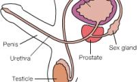 infertility-sperm-animation_default